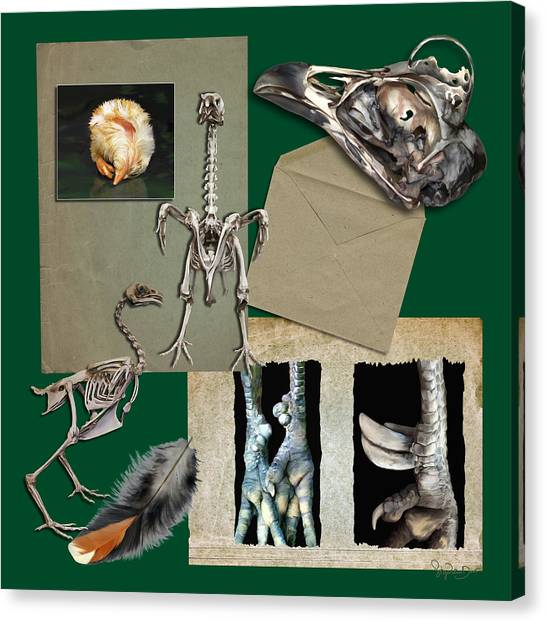 8. Chook Parts Canvas Print