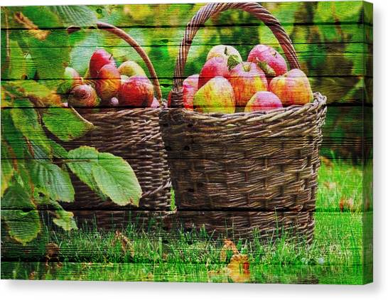 Mango Canvas Print - Fruit by Joe Hamilton