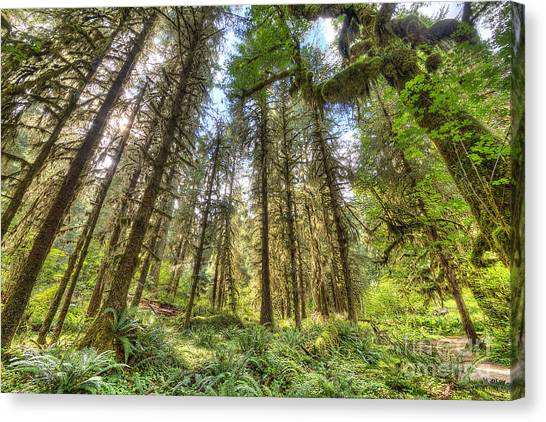 Mossy Forest Canvas Print - Hoh Rain Forest by Twenty Two North Photography