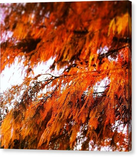 Autumn Leaves Canvas Print - Instagram Photo by Josselyn Cherry