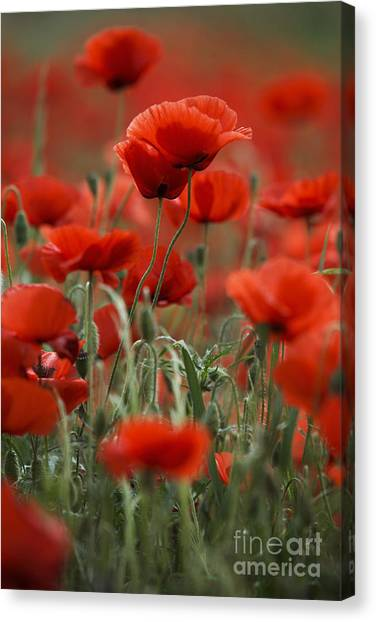 Crowd Canvas Print - Red by Nailia Schwarz