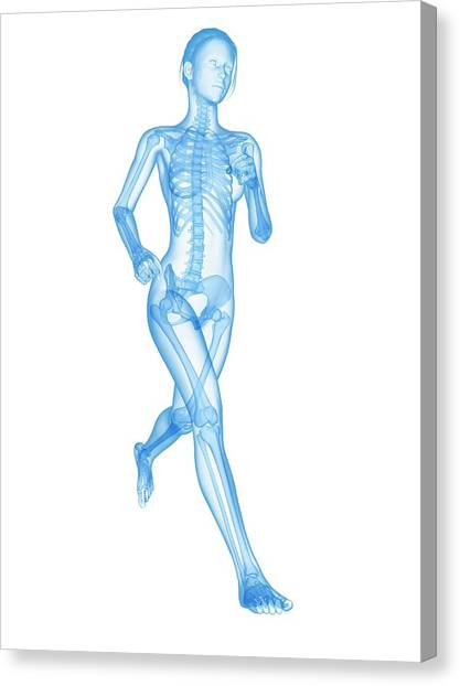 Jogger Canvas Print - Skeletal System Of A Runner by Sebastian Kaulitzki