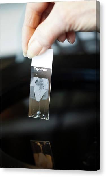 Sperm Whales Canvas Print - Sperm Whale Tissue Analysis by Thomas Fredberg
