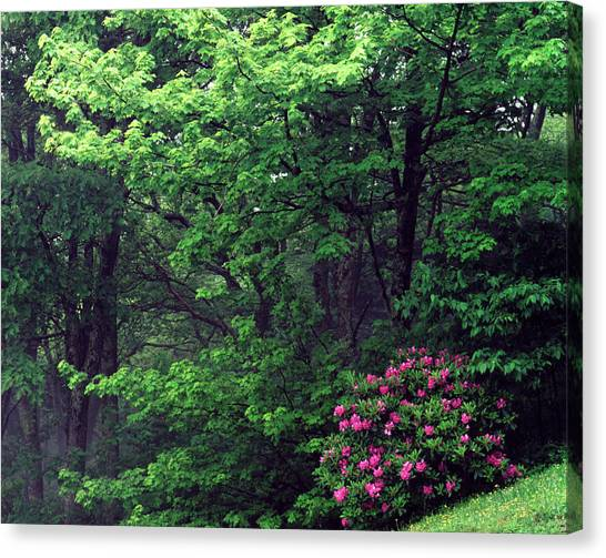Pisgah National Forest Canvas Print - Usa, North Carolina, Pisgah National by Adam Jones