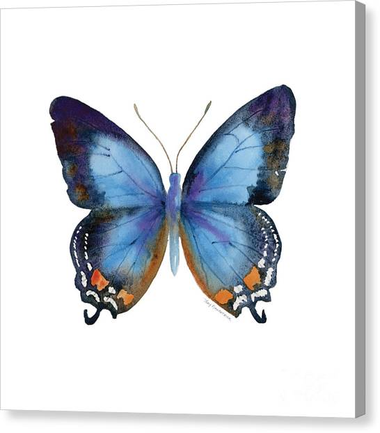 Butterfly Canvas Print - 80 Imperial Blue Butterfly by Amy Kirkpatrick