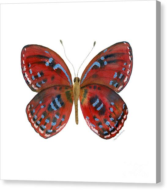 81 Paralaxita Butterfly Canvas Print