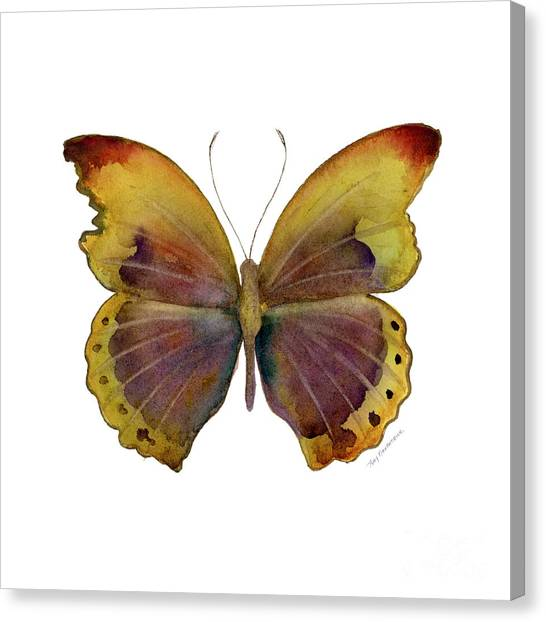 Gold Canvas Print - 84 Gold-banded Glider Butterfly by Amy Kirkpatrick