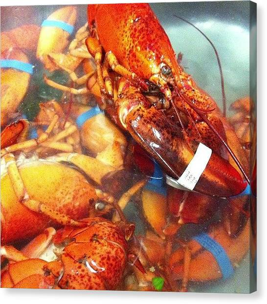 Lobster Canvas Print - Instagram Photo by Gabriella Meszaros