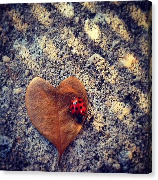 Ladybugs Canvas Print - Heart Leaf And Lady Bug by Brandon McKenzie