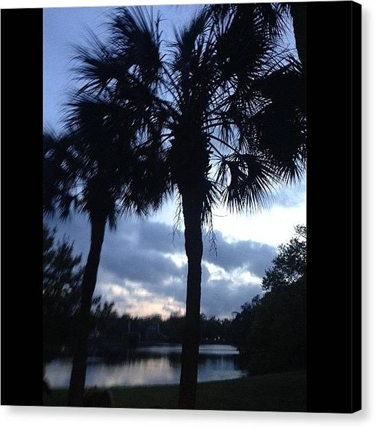 South Carolina Canvas Print - Palm Trees by Megan Parmelee