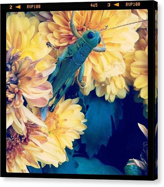 Grasshoppers Canvas Print - Good Morning💛 by Vanessa Aguilar