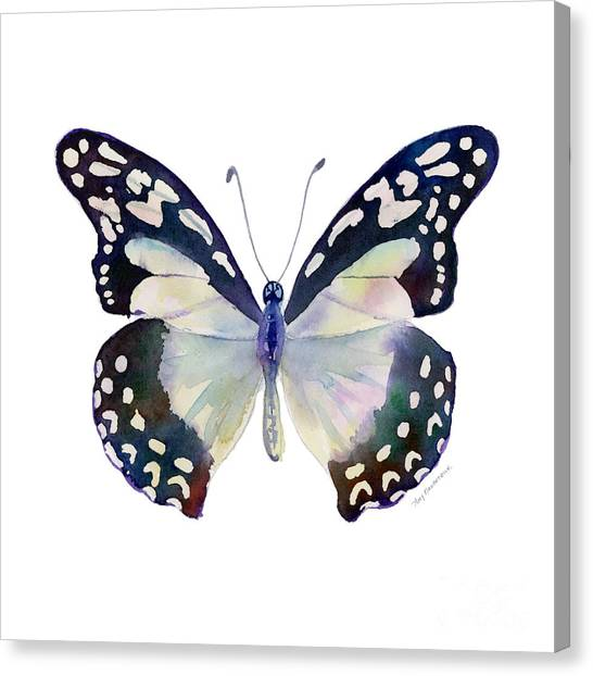 90 Angola White Lady Butterfly Canvas Print