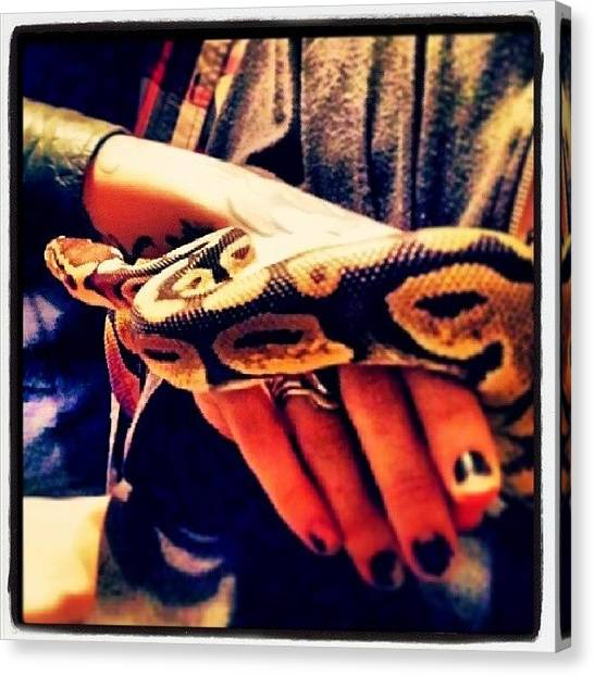 Pythons Canvas Print - Instagram Photo by Snov Snovins