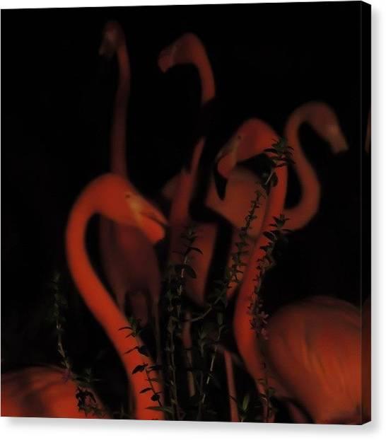 Flamingos Canvas Print - Instagram Photo by Yasuyo Ikenaga