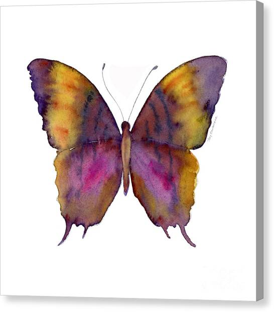 White Butterfly Canvas Print - 99 Marcella Daggerwing Butterfly by Amy Kirkpatrick
