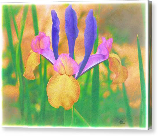 A Bearded Iris In My Vincent Van Gogh Garden Canvas Print