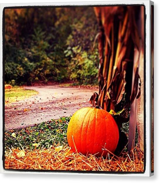 Pumpkins Canvas Print - A Beautiful Season  by Heidi Hermes