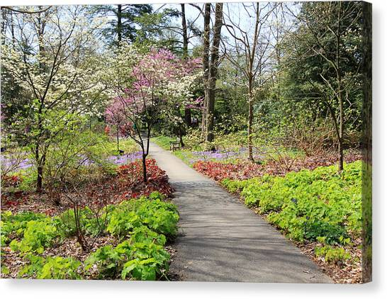 A Beautiful Spring Walk Canvas Print
