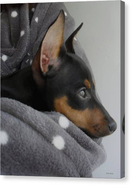 Miniature Pinscher  Canvas Print