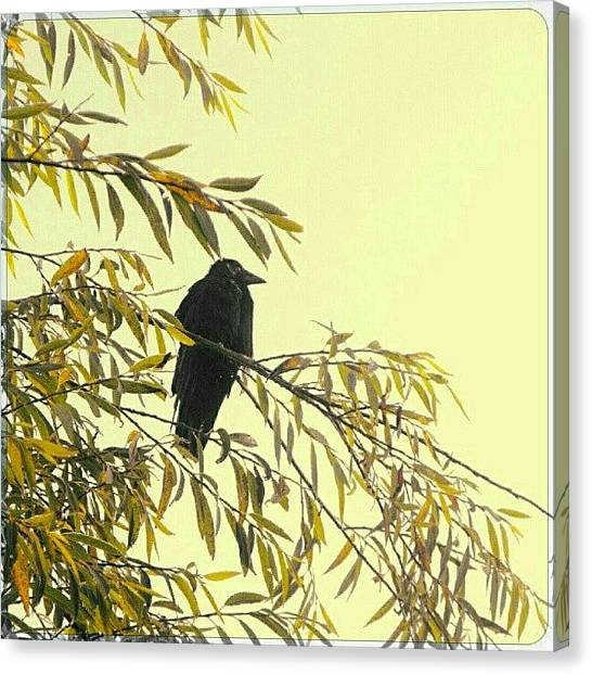 Ravens Canvas Print - A Bird On A Foggy Morning by Alexandra Cook