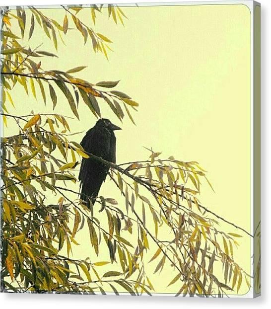 Ravens Canvas Print - A Bird On A Foggy Morning by Alexandra Cook