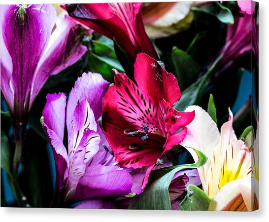 A Bouquet Of Peruvian Lilies Canvas Print