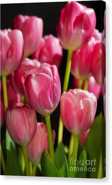 A Bouquet Of Pink Tulips Canvas Print