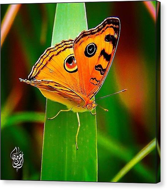 Ladybugs Canvas Print - A Butterfly On The Grass Behind My by Ahmed Oujan