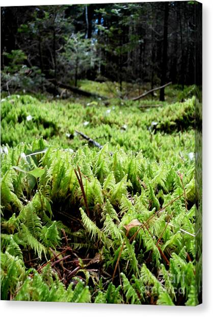 A Carpet Of Moss  Canvas Print by Steven Valkenberg