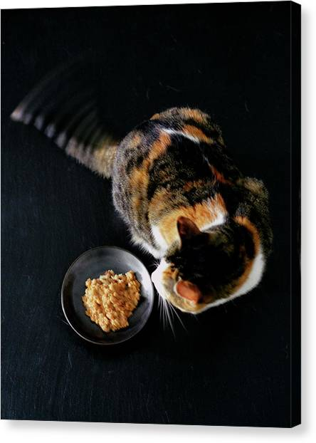 A Cat Beside A Dish Of Cat Food Canvas Print