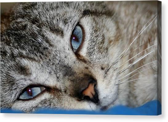 A Cat Named...blue Canvas Print