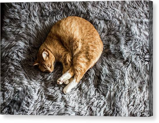 A Cat Napping Canvas Print by Jordan Siemens