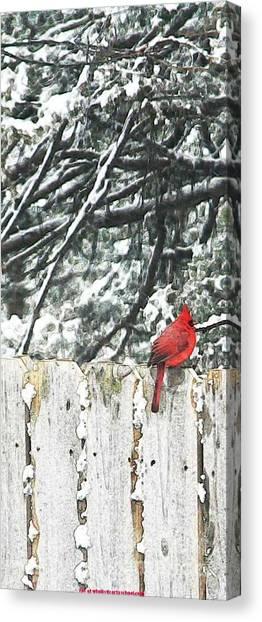 A Christmas Cardinal Canvas Print