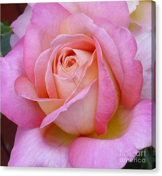 A Classic Rose Canvas Print