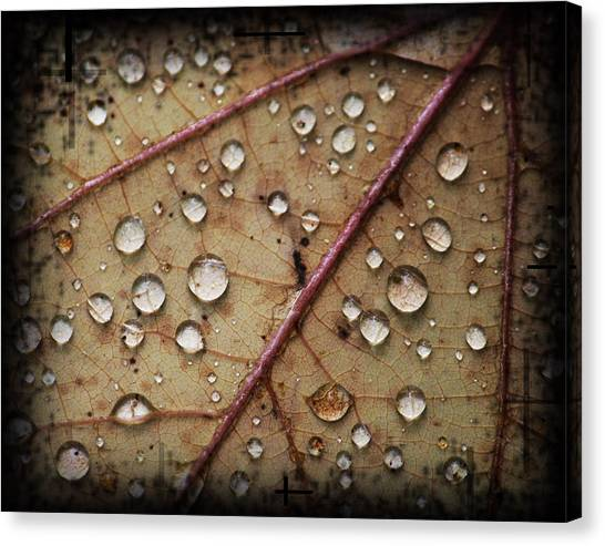 A Close Up Of A Wet Leaf Canvas Print by Andrew Sliwinski