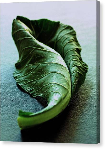 A Collard Leaf Canvas Print