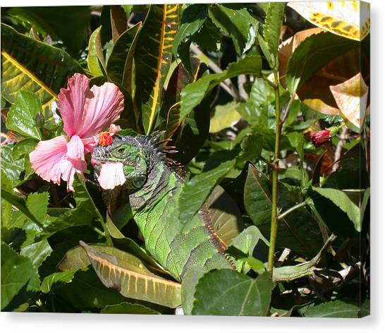 Pink Camo Canvas Print - A Colorful Meal by Shane Bechler