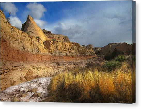 A Coyote At Pawnee Arroyo Canvas Print by Ric Soulen