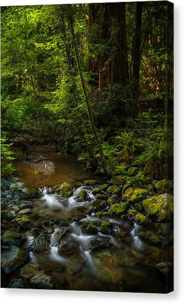 A Creek Among Giants Canvas Print