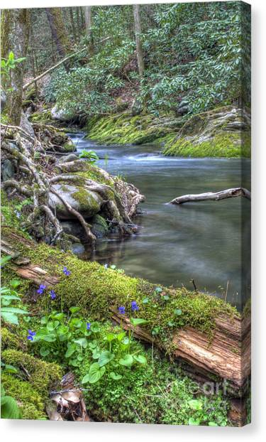 A Creek Side Hike Canvas Print