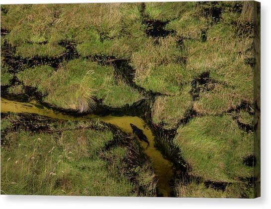 Okavango Swamp Canvas Print - A Crocodile, Crocodylinae, Swimming by Beverly Joubert