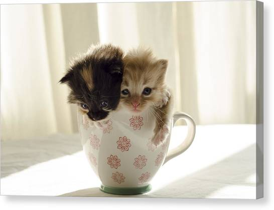 A Cup Of Cuteness Canvas Print