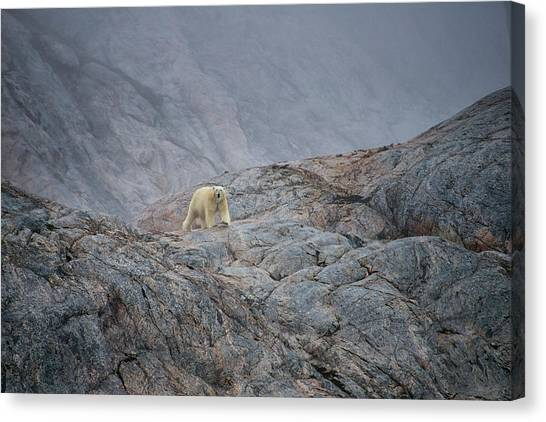 Canvas Print - A Curious Polar Bear Approaching A Boat by Andy Mann