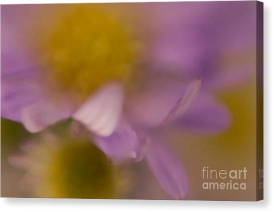 A Curl Of A Petal Canvas Print by Niki Van Velden