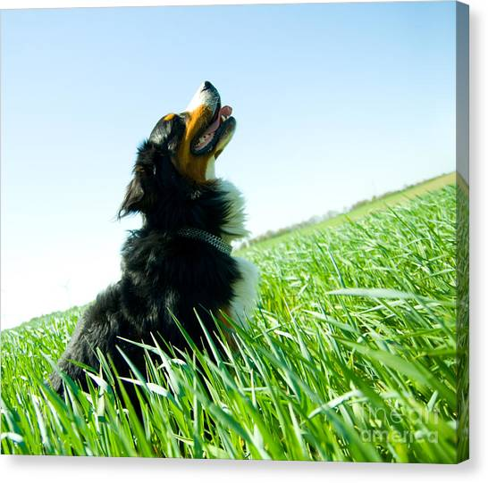 A Cute Dog On The Field Canvas Print