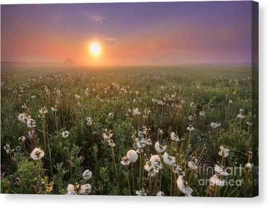 Prairie Sunrises Canvas Print - A Dandelion Kind Of Morning by Dan Jurak