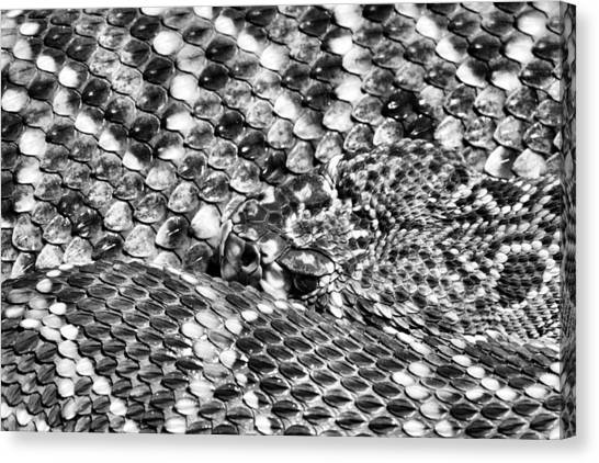 Poisonous Snakes Canvas Print - A Dangerous Abstract by JC Findley
