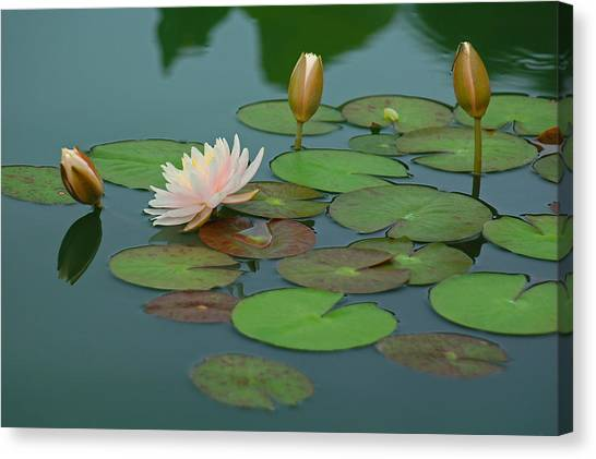 A Day At The Lily Pond Canvas Print