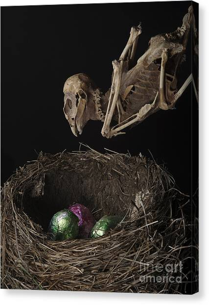 A Dead Bird Flies Into Its Nest Only To Find Chocolate Eggs Canvas Print