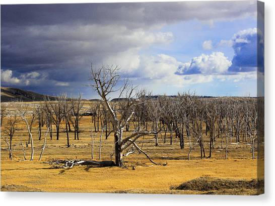 A Dead Tree Among Many Canvas Print